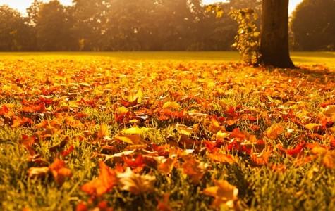 Fall break: Thanks For The Memories