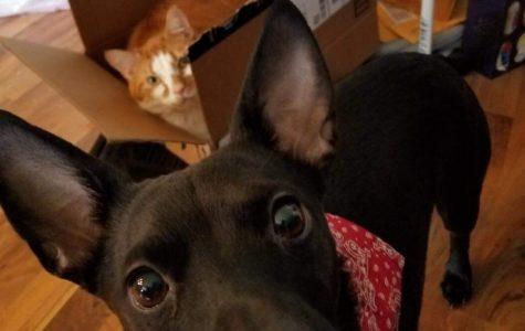 Pet Spotlight: Phineas, Ferb, and Zeda