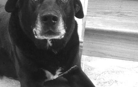 Pet Spotlight: Rigsby