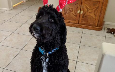 Pet Spotlight: Milo