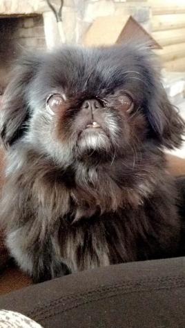 Pet Spotlight: Hank