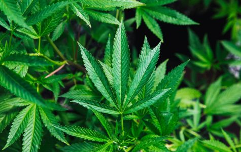 Legalized: What Legalized Recreational Cannabis Means for the Decatur Area and for Millikin's Campus