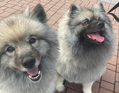Pet Spotlight: Phoebe and Georgia